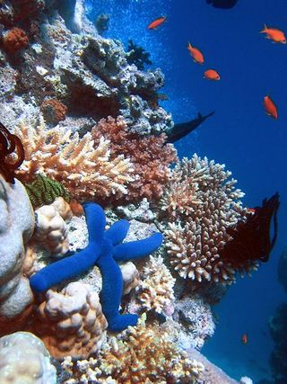 Coral reefs 2