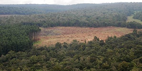 Mau_forest1