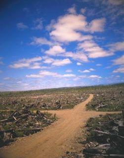 44288deforestation_compress