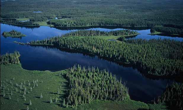 Http___www.borealbirds