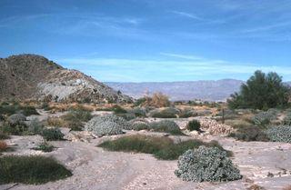 Desert reserve California