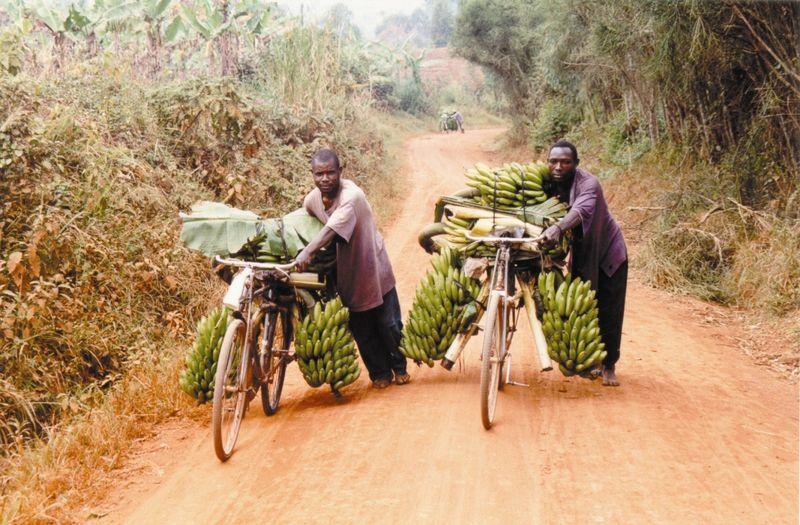 Bananas on bikes