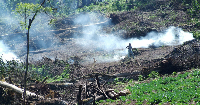Mau Forest clearance