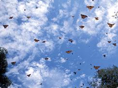 Migrating moths
