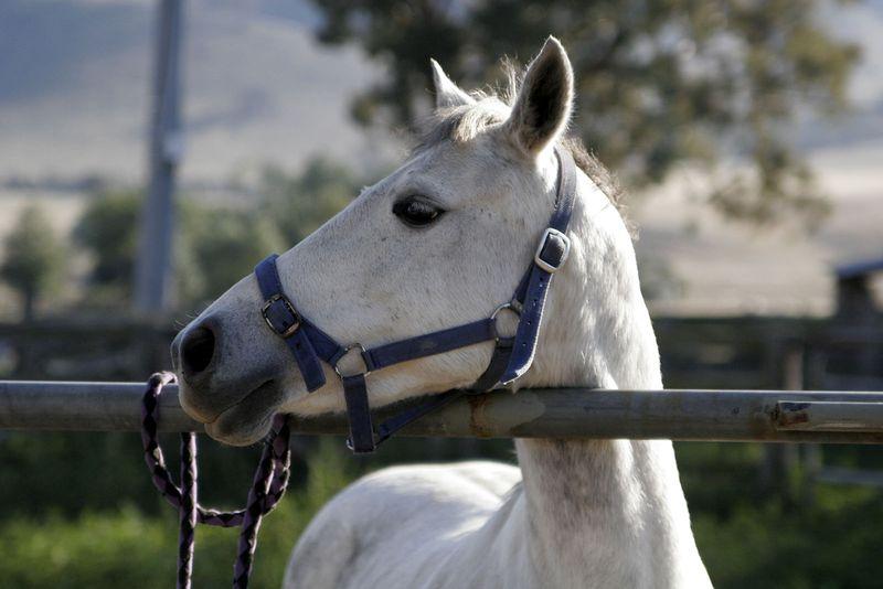 Horse_profile