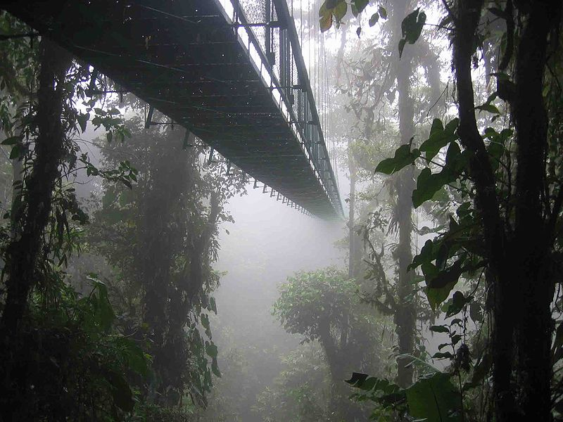 800px-Costa_rica_santa_elena_skywalk