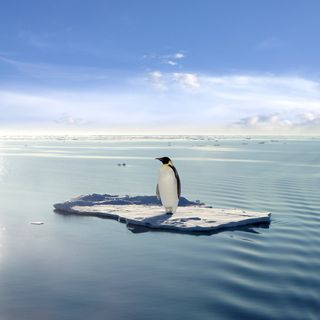 Penguin on ice block_shutterstock_3784216