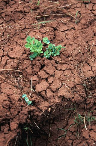 44271drought