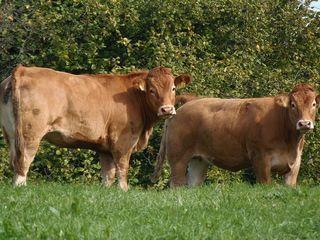 Blog-farm visits1