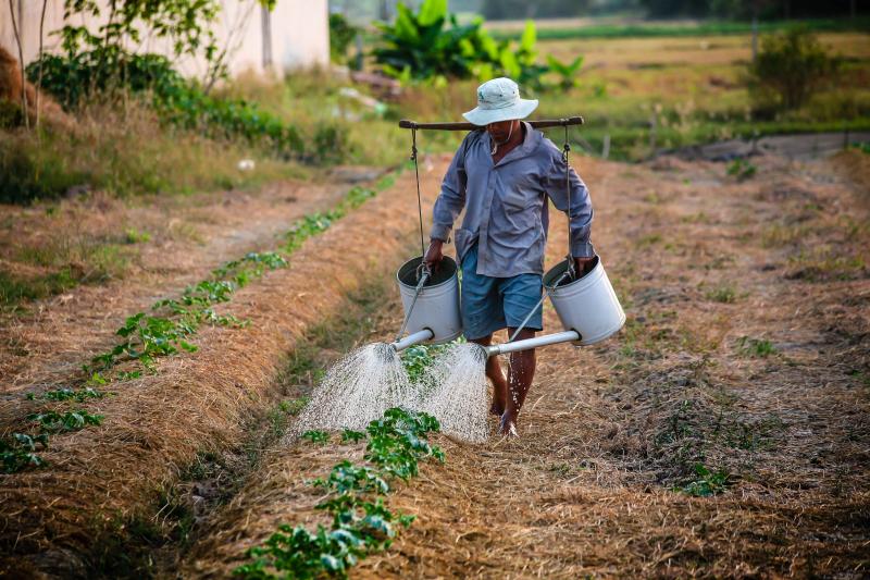 Watering-1501209