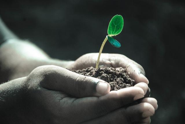 Plant_hand_soil-112640
