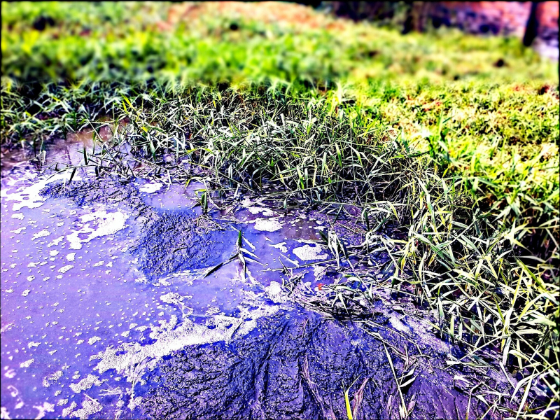 Polluted_water