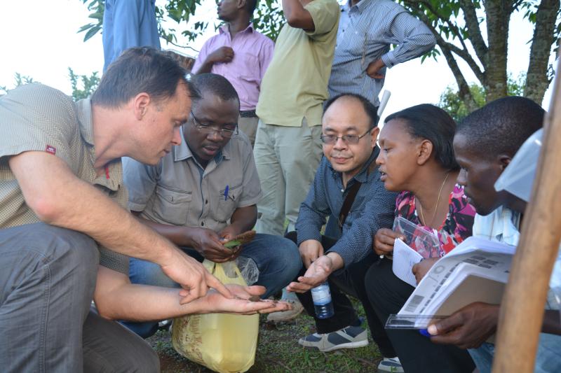 Rwanda soil pests 3