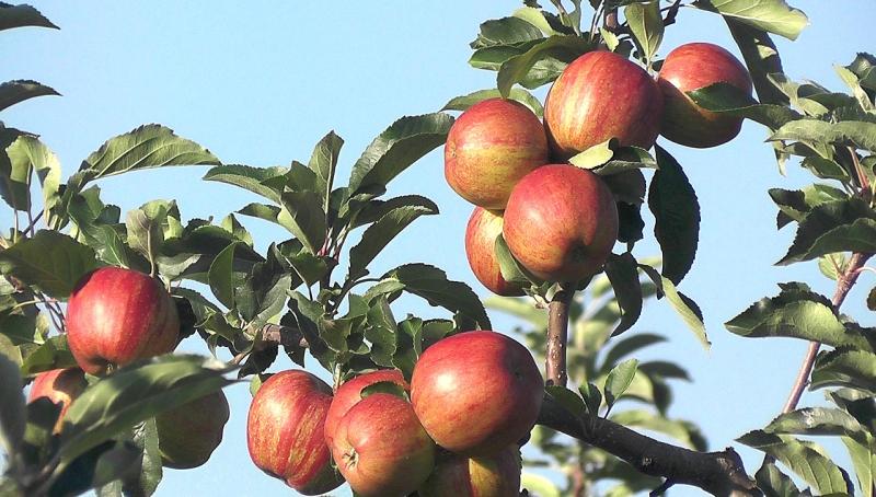 Fruit-1577013_1280