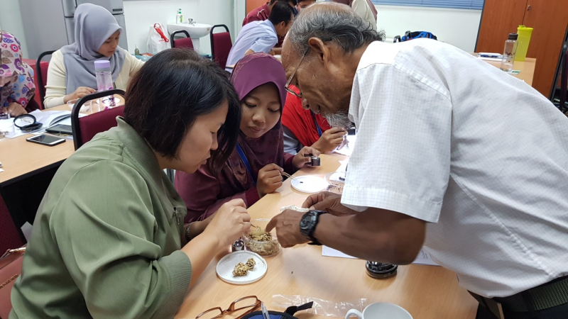 Termites workshop 6