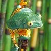 Amphibian3_1