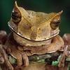 Amphibian5_1