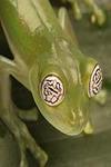 Amphibian6_3